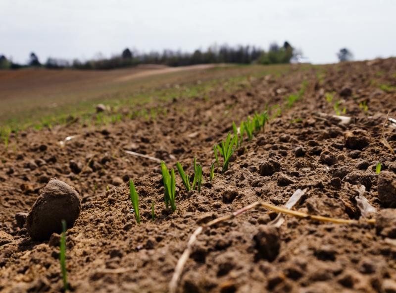 Przekształcenie działki rolnej w budowlaną